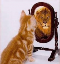 Cat seeing himself as a lion in a mirror